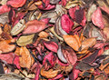 Dried Rose Petals. Royalty Free Stock Photo - 88260095