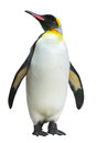 Emperor Penguin Royalty Free Stock Image - 88282926
