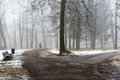 Snowy Winter Park In Mist Royalty Free Stock Photography - 88292957