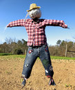 Scarecrow Royalty Free Stock Images - 8832019