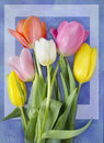 Beautiful Blossoming Tulip Flower. Floral Design. Nature Background. Spring Background With Beautiful Fresh Flowers Stock Photo - 88334110