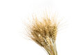 Rye Bunch Isolated On White Background. Grain Bouquet Stock Photo - 88344280