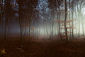 Light Into Foggy Forest Royalty Free Stock Photo - 88412665