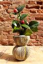 Vase From Newspapers With Camelia Plant On A Wooden Table And Wa Royalty Free Stock Photos - 88479578