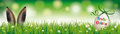 Natural Easter Egg Rabbit Ears Green Ribbon Ostern Header Stock Photo - 88496100