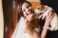 Little Dog Licks A Bride`s Face Stock Image - 88501531