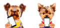 Funny Dogs Holding Tablet With White Screen Stock Image - 88550261