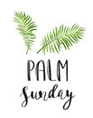 Palm Leafs  Icon. Vector Illustration For The Christian Holiday Palm Sunday Royalty Free Stock Images - 88557559