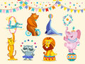 Circus Animals Decorative Icons Set. Funny Circus Elephant, Tiger, Cat, Bear, Raccoon, Lion Perform Tricks. Vector Stock Images - 88564384