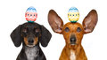 Easter Bunny Dogs With Egg Stock Photography - 88571662