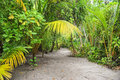 Palm Leaves. Tropical Forest On The Island In Indian Ocean. Beautiful Landscape Of Humid Tropical Jungle. Tropical Forest Stock Photo - 88597280