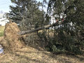 Fallen Tree From Wind Storm Damage Royalty Free Stock Photo - 88597855