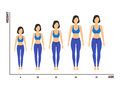 Height And Age Measurement Of Growth From Girl To Woman. Vector Stock Image - 88615401
