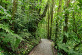 Stone Path In Rainforest Monteverde Costa Rica Stock Photography - 88620682