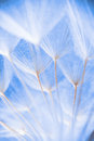 Abstract Macro Photo Of Plant Seeds At A Morning Stock Images - 88644594