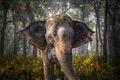 Elephants In Chitwan Royalty Free Stock Photos - 88718948