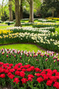 Pink And Red Tulips Stock Images - 88773364