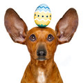 Easter Bunny Dog With Egg Stock Photo - 88788530