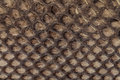 Genuine Snakeskin. Leather Texture Background. Closeup Photo. Royalty Free Stock Images - 88820539