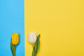 Top View Of Two Tulips Closely Placed To Each Other Stock Image - 88836091