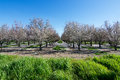 Orchard In California Royalty Free Stock Photo - 88864675