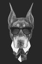 Portrait Of Doberman Pinscher In Suit. Royalty Free Stock Photography - 88906237