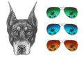 Portrait Of Doberman Pinscher With Glasses. Stock Photos - 88906423