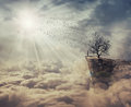 The Tree Of Death Royalty Free Stock Images - 88910669
