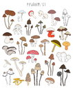 Collection Of Hand Drawn Colorful Mushrooms. Set Isolated Edible Stock Photos - 88968253