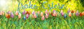 Frohe Ostern Stock Photo - 88987830