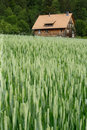 House In The Wheat Field Royalty Free Stock Photo - 892655