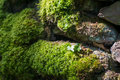 Moss Lit By Sunlight On A Dry Stone Wall. Royalty Free Stock Image - 89061456