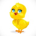 Cute Baby Chick Isolated On A White Stock Photo - 89100450