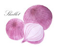 Watercolor Painting Of Shallot Stock Image - 89180111