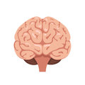 Brain Front View Icon Stock Photo - 89183850