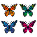 Colorful Butterflies On White Background Stock Photography - 89210052