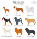 Working Watching Dog Breeds Collection Isolated On White. Flat Stock Images - 89250064