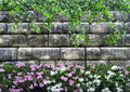 Background With A Stone Wall Of Curly Plants And Beautiful Flowers Stock Images - 89308704