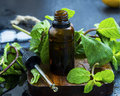 Essential Mint Oil In Brown Glass Bottle With Dropper, Herbal Me Royalty Free Stock Photography - 89342507