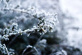 Plant Covered With Hoarfrost Stock Photography - 89377212