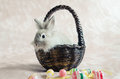 Rabbit In Basket With Easter Eggs Royalty Free Stock Images - 89380719