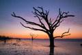 Silhouette Of A Tree In The Ocean Stock Photos - 89398443