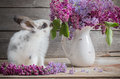 Easter Bunny With Lilac Stock Photography - 89425542