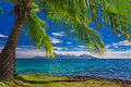 Palm Tree On The Beach On Tahiti With The View Of Moorea Island Royalty Free Stock Image - 89444466