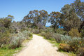 Bold Park Footpath Royalty Free Stock Photography - 89456597
