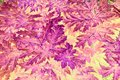 Abstract Leaf Pattern Royalty Free Stock Photography - 89457697