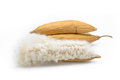 Kapok Seeds With White Fiber For Making Pillow Stock Image - 89497941