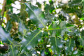 Holly Leaves On A Evergreen Tree Stock Photography - 89510872