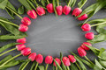 Pink Fresh Spring Tulips Botanical Art Floral Background Round Frame Wreath Wild Flowers Concept Woman`s Day Greeting Stock Images - 89516184