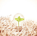 Light Bulb With Green Tree Inside Place On Shredded Recycled Pap Stock Photography - 89570292
